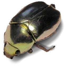 El escarabajo de oro, cuento de Edgar Allan Poe